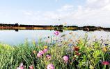 這是南疆最大的國家溼地公園,譽為塔克拉瑪干沙漠北緣的塞上江南