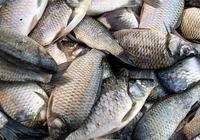 各位釣友知道這是什麼魚嗎?別再用排除法了,我想知道答案