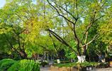 隨拍重慶 四川美術學院老校區