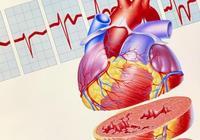 淺談心臟疲勞——前負荷與後負荷