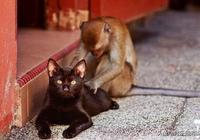 兩歲虎斑貓趕走入侵黑熊,網友:惹不起