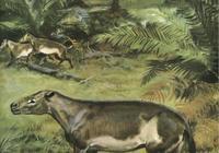揭祕海洋中最早的哺乳動物的起源