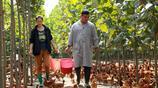大學生夫妻放棄銀行工作回家養雞,只為讓老百姓吃上放心雞