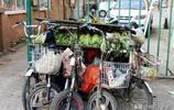 實拍瀋陽街頭晾晒大白菜的獨特街景,連輪椅上都晾上了白菜