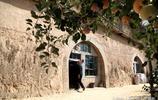 農村7旬老人在小院種了60棵蘋果樹,10年後的秋天看美成啥樣
