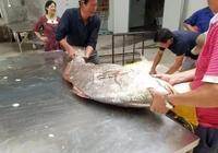舟山漁民捕到大魚開價110萬