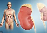 教你養腎操,養腎食物,堅持下來,腎會慢慢變好