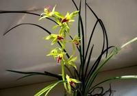夏天花卉系列推薦:蕙蘭銘品老八種