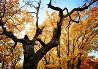 讀點|那個春天我曾種下一棵樹,紀念我們的青澀愛情