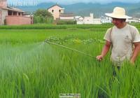防治病蟲害新農藥好還是老農藥好?