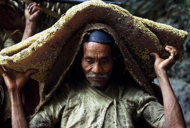 實拍世界最高山上的採蜜人,死亡率極高,原始採蜜技藝即將消亡