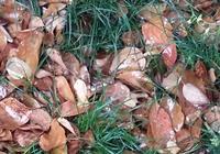 葉生如歌,葉落成詩