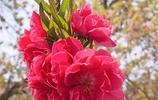 春天萬物復甦,百花盛開。摘一枝喜愛的花朵,感受這濃濃的春意!