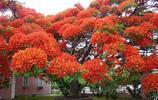 世界最美的10棵樹,5棵在美國,只有一棵在中國