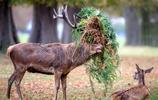 太可愛了也受不了啊!10張天然呆全開的動物照片真是太可愛了
