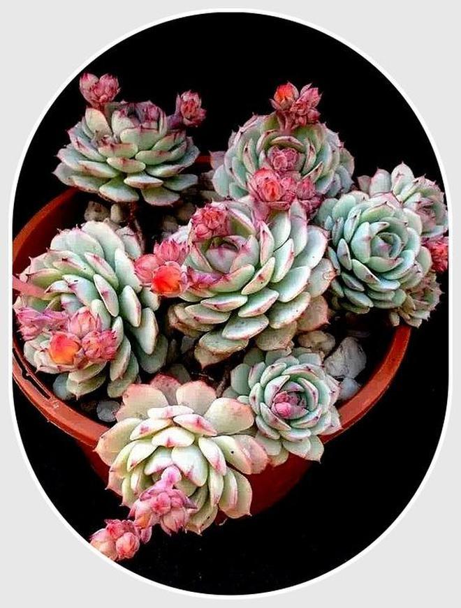 多肉植物1