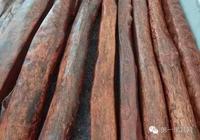 「知識」中國古代四大名木,你知道嗎?