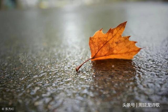 七律:秋傷