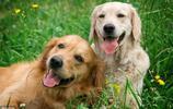 第一次養狗,更推薦養母狗,更溫順容易養適合新手養狗