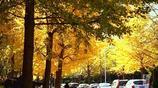 圖蟲攝影:秋意濃濃