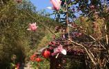 羅浮山:最美的人間仙境,不一樣的體驗