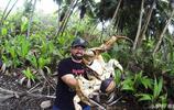比帝王蟹還大隻的叫做椰子蟹,擅長爬樹摘椰子,市場價格昂貴