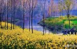 安徽淮北:春意盎然,攝影師鏡頭下的絕美春天!