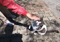 """流浪貓攔住路人,不給吃的不讓走,這年頭連流浪貓也成""""路霸""""了"""