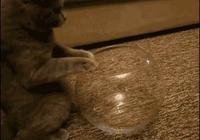 眼前的貓不是貓,你說的貓是一灘水!