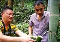 桂林灌陽農民竹筒酒是怎麼樣?