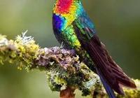 罕見鳥照!太美了,難得一見!