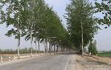 組圖:青島平度有個村叫醫官莊,這個村名有何含義?