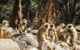 親媽將孩子扔樹林,猴子撿養她8年,被救出後她的行為讓眾人發矇