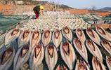 寒冬時節 膠東沿海農民靠一樣東西發了財 城裡人爭著去嚐鮮