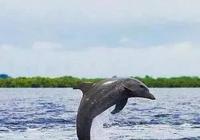 """把人騙的團團轉,還當領隊帶同伴""""越獄""""……這隻海豚簡直要成精"""