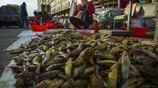 中國北方最古老最大的淡水野生魚市場,你每天吃的魚就來自這裡!