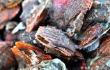 實拍青島海鮮早市 品種繁多貨源新鮮 10多塊錢一斤海貨看看都有啥