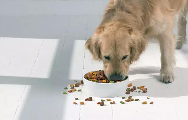 乾糧vs溼糧對比,最後我選擇混著吃!