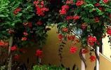 種一株爬藤植物一不小心就長成一片小瀑布,即能觀賞又能降溫