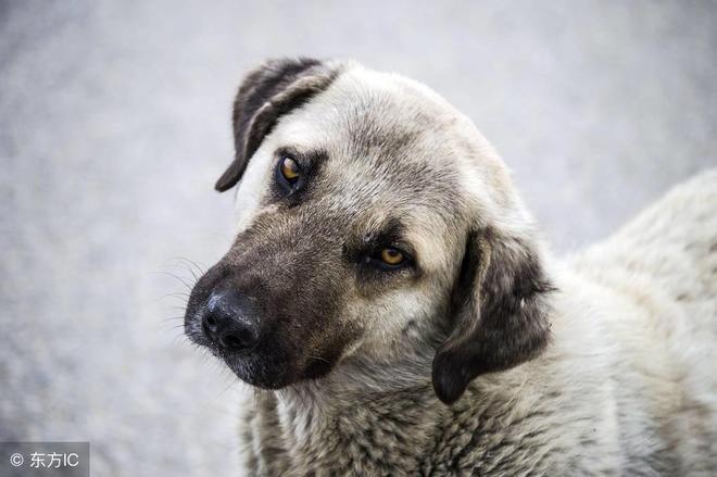狗被殘忍丟棄,苦苦等候主人回來,卻等來了悲慘命運