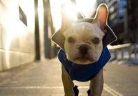 """養狗的注意了,在冬天這5種狗狗,最怕""""冷""""了!"""