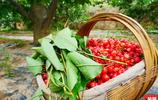 天水煙鋪大櫻桃,又大又紅又甜,中國十大好吃櫻桃,趕緊來吃!
