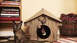 希望你某天能像貓一樣有自己的豪宅,致正在為未來努力打拼的你