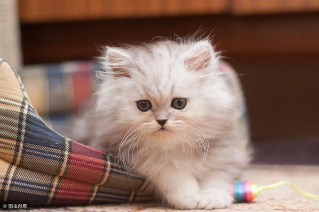 貓咪喜歡睡在你旁邊的三個原因