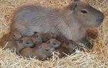 14張動物寶寶的照片,你看了就會明白為什麼大家都喜歡可愛的萌寵