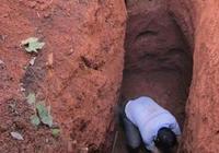地下4尺竟挖到白蟻王國,專家說白蟻后最少活了40年