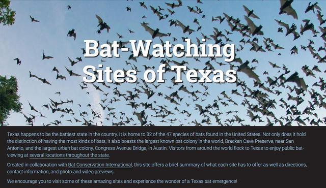 NBA30隊為何馬刺主場這麼多蝙蝠?只因他們身處這裡