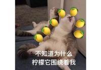 沈夢辰多次拒絕杜海濤求婚,沈爸解釋聚少離多,網友點評一針見血