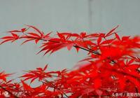 秋葉美 秋水長 芭蕉夜雨秋聲涼 秋葉滿山岡 秋天紅葉竟然這麼美!
