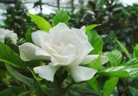 3種夏季適合插杆的花,帶葉子枝叉埋土裡,生根長葉不腐爛